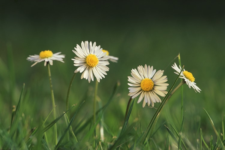 Lule Shqerre